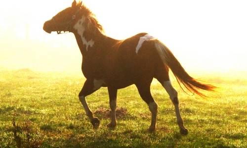 ハワイ乗馬体験