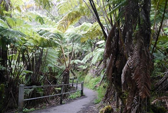 キラウエア火山公園のジャングルトレッキングコース