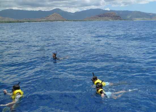 ハワイ イルカと泳ぐ