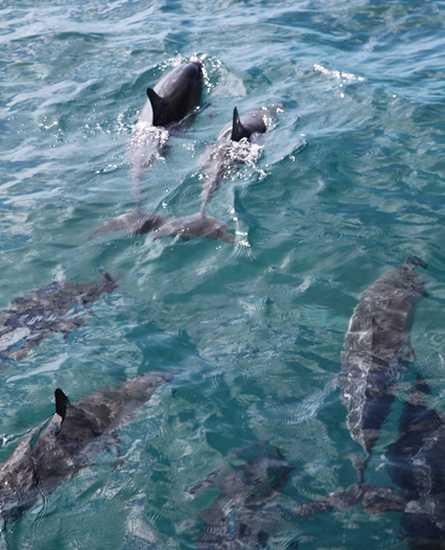 イルカと泳ぐ ハワイ