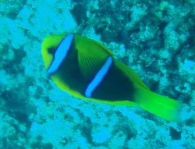 グアムの魚