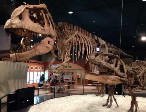 名古屋 恐竜博物館