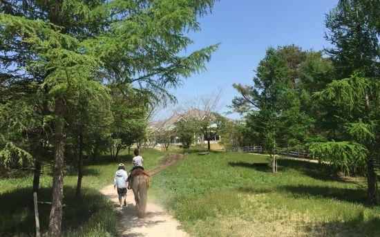 蒜山高原 乗馬コース