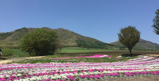 ジャージランド花畑